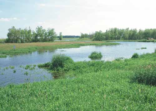 This WRP site in Worth County provides the landonwer many hours of outdoor recreation including bird watching and hunting.