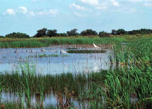 Restored wetland in Iowa.