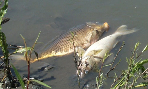 Two fish in an Iowa waterway died during a manure spill.