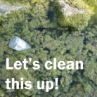 "Image shows a thick mat of green algae with the text ""Let's clean this up!"""
