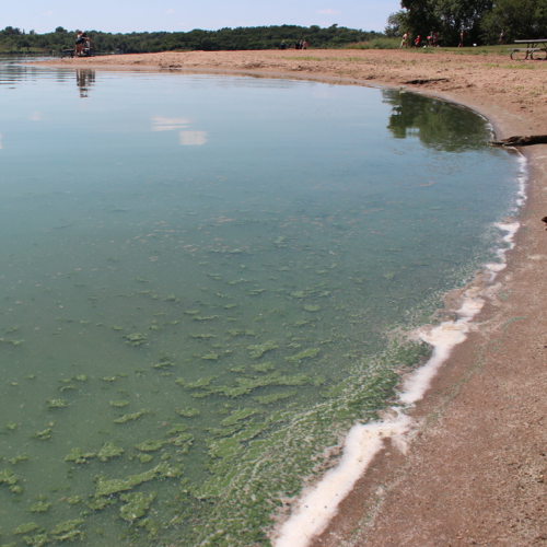 Swimming was not advised at Rock Creek Lake on August 10 due to the presence of a harmful algae bloom.